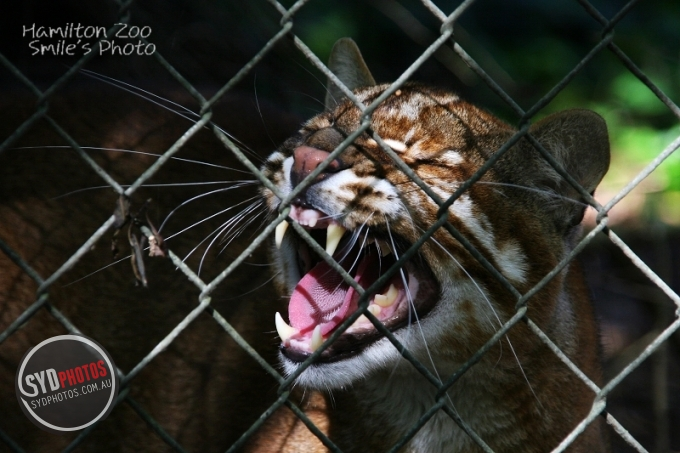 '08 hamilton zoo, By Photographer Smile, Created on 08 Apr 2011, SYDPHOTOS Photography all rights reserved.