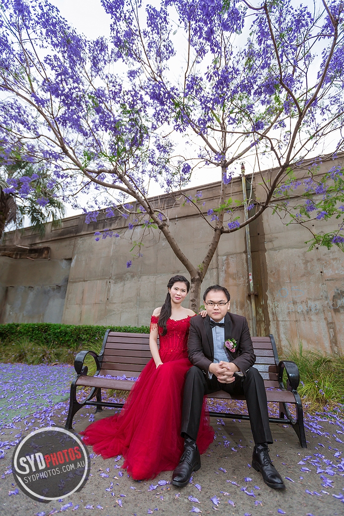 DYL-388.jpg, By Photographer Sydphotos.wedding, Created on 09 Feb 2017, SYDPHOTOS Photography all rights reserved.