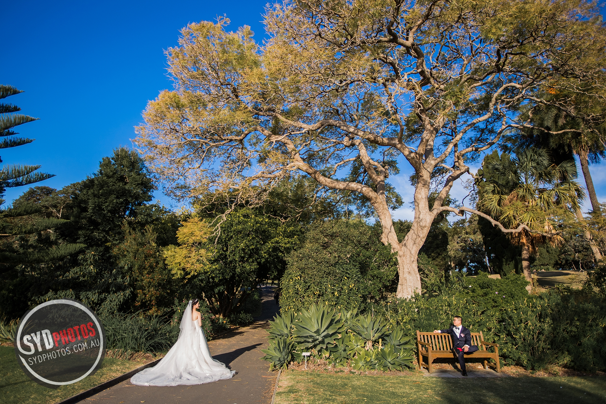 id-80174-20170903-635.jpg, By Photographer Sydphotos.wedding, Created on 11 Feb 2018, SYDPHOTOS Photography all rights reserved.