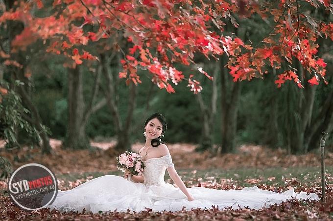ID-109382-20190505 悉尼蓝山枫叶婚纱照